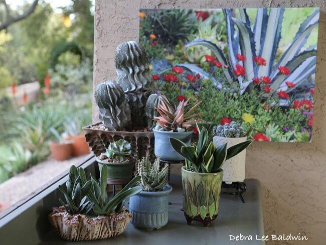 Succulent plant care boffo developments - Succulent container gardens debra lee baldwin ...